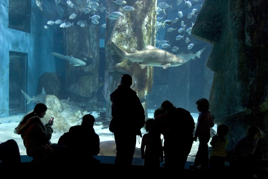 Sea Life London Aquarium Priority Entrance Tickets Images